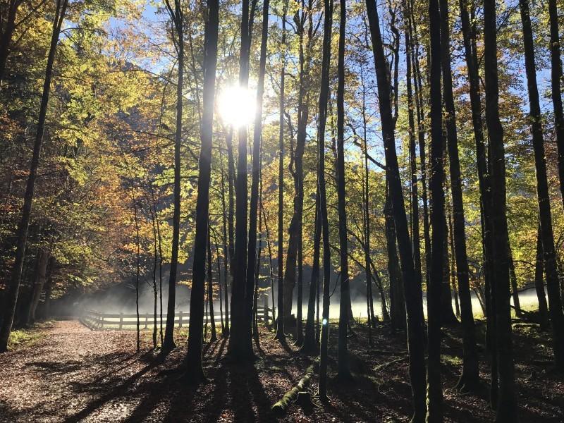 Herbstwald Berchtesgadener Land